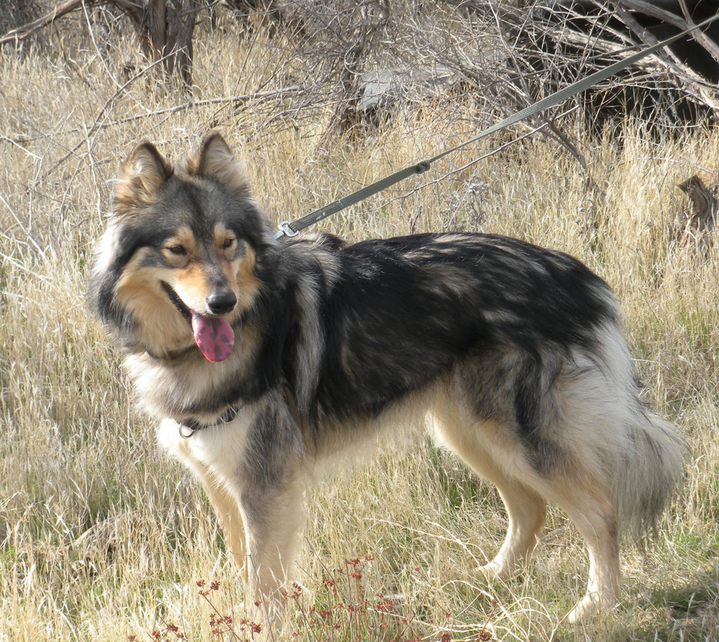 Guess the Breed | Wilde About Dogs