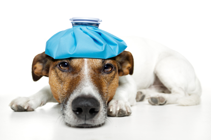 dog pain ice bag