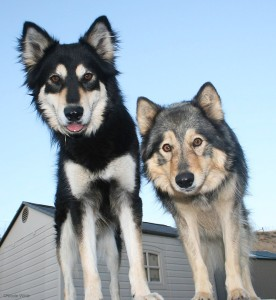 confident-dog-fearful-dog-blog