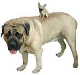 bigsmalldog