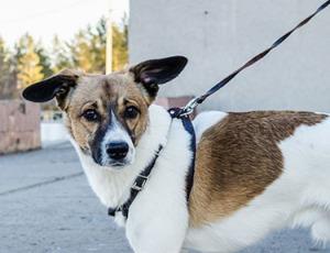 dog on leash pixabay small